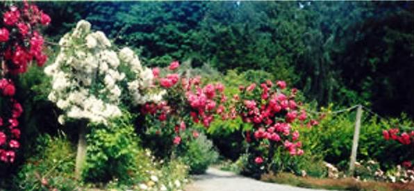 Hatley Castle National Historic Site Victoria BC - Rose Garden
