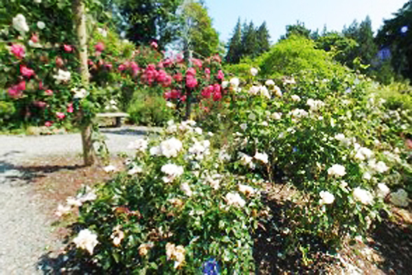 Hatley Castle National Historic Site Victoria BC - Rose Garden